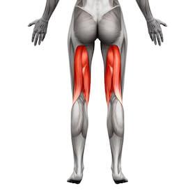 Muskler i ben