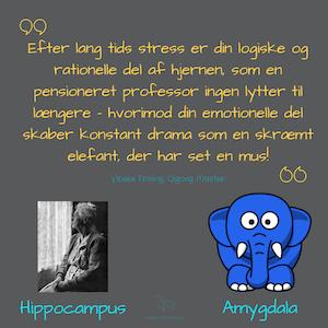 Hippocampus-og-Amygdala-